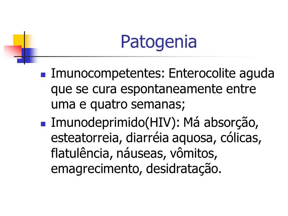 Patogenia Imunocompetentes: Enterocolite aguda que se cura espontaneamente entre uma e quatro semanas; Imunodeprimido(HIV): Má absorção, esteatorreia, diarréia aquosa, cólicas, flatulência, náuseas, vômitos, emagrecimento, desidratação.