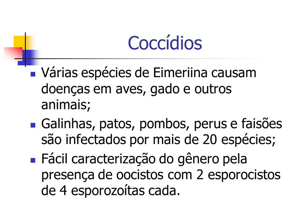 Coccídios Várias espécies de Eimeriina causam doenças em aves, gado e outros animais; Galinhas, patos, pombos, perus e faisões são infectados por mais de 20 espécies; Fácil caracterização do gênero pela presença de oocistos com 2 esporocistos de 4 esporozoítas cada.
