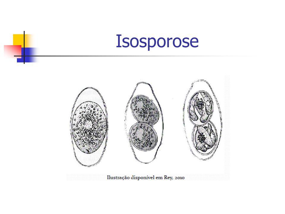 Isosporose