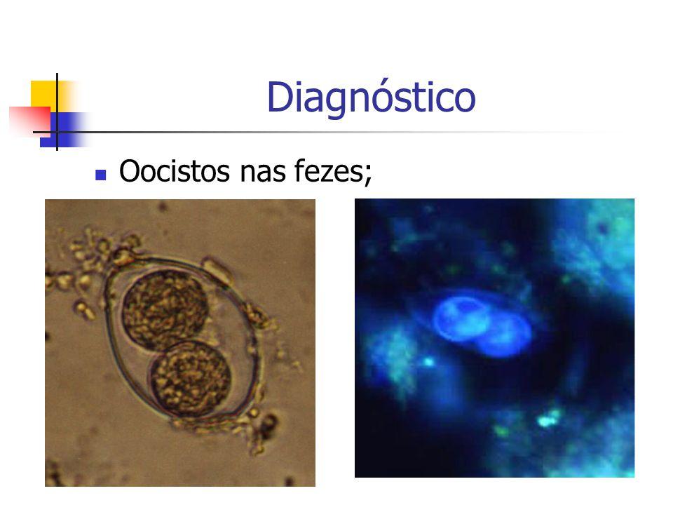 Diagnóstico Oocistos nas fezes;
