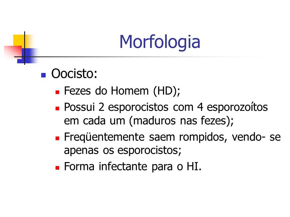 Morfologia Oocisto: Fezes do Homem (HD); Possui 2 esporocistos com 4 esporozoítos em cada um (maduros nas fezes); Freqüentemente saem rompidos, vendo- se apenas os esporocistos; Forma infectante para o HI.