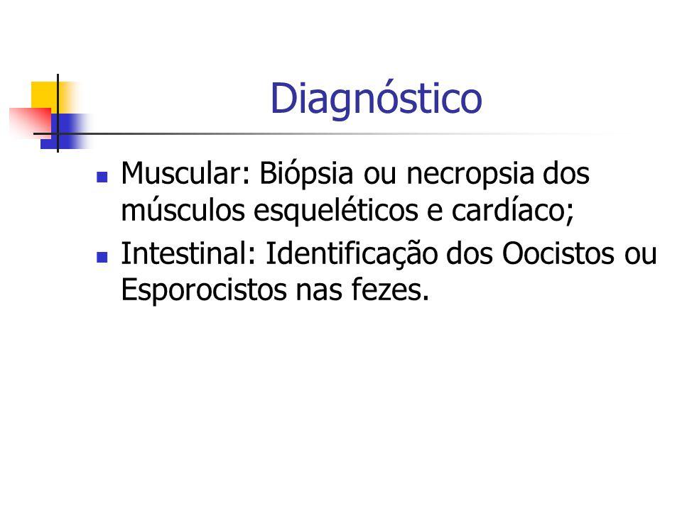 Diagnóstico Muscular: Biópsia ou necropsia dos músculos esqueléticos e cardíaco; Intestinal: Identificação dos Oocistos ou Esporocistos nas fezes.