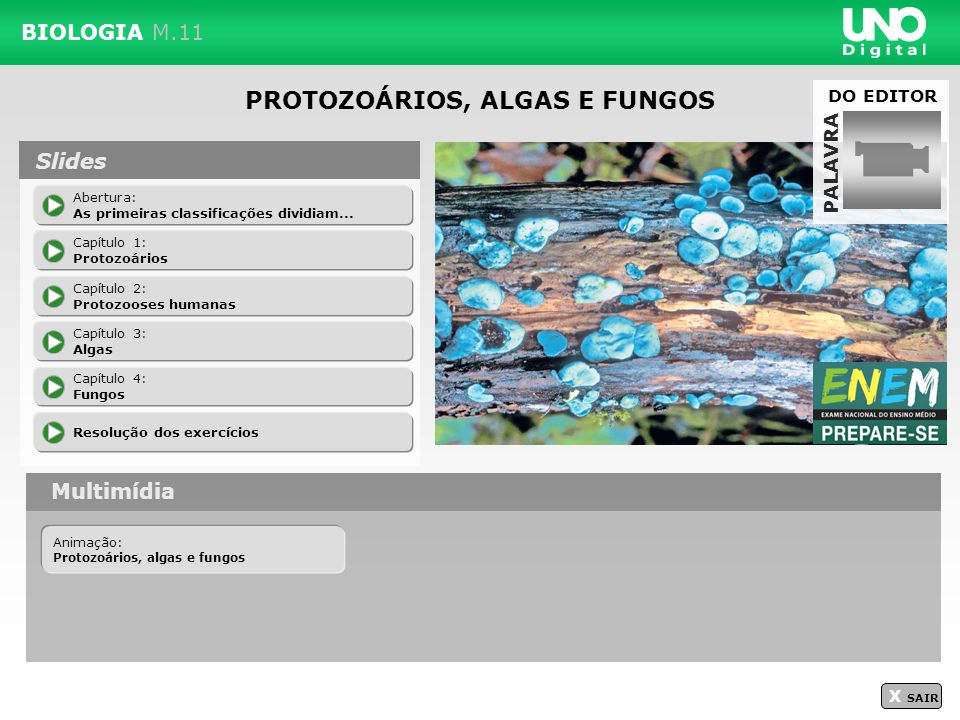 X SAIR ALGAS têm são classificadas no Reino Protoctista Reprodução assexuada ocorre por Divisão binária Zoosporia Fragmentação Reprodução sexuada na maioria das algas multicelulares ocorre pela Alternância de gerações é o ciclo em que ocorrem Esporófito(s)Gametófito(s) é Diploide Zigoto Esporo(s) Gametas Haploide(s) é produz germina e origina o produz são desenvolve-se e origina o é unem-se e originam o Navegando no módulo