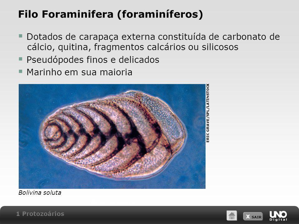 X SAIR Filo Foraminifera (foraminíferos)  Dotados de carapaça externa constituída de carbonato de cálcio, quitina, fragmentos calcários ou silicosos  Pseudópodes finos e delicados  Marinho em sua maioria Bolivina soluta.