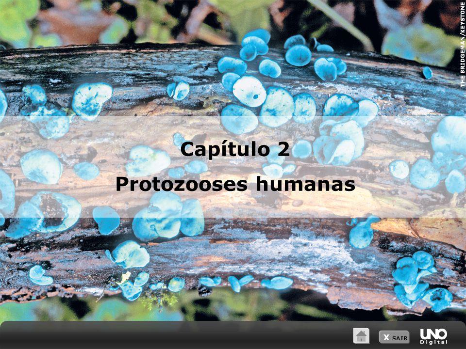 THE BRIDGEMAN/KEYSTONE X SAIR Capítulo 2 Protozooses humanas