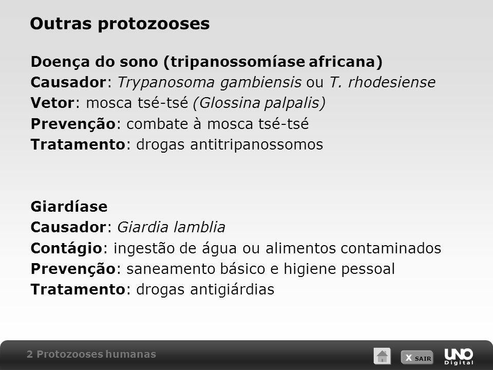 X SAIR Outras protozooses Doença do sono (tripanossomíase africana) Causador: Trypanosoma gambiensis ou T.