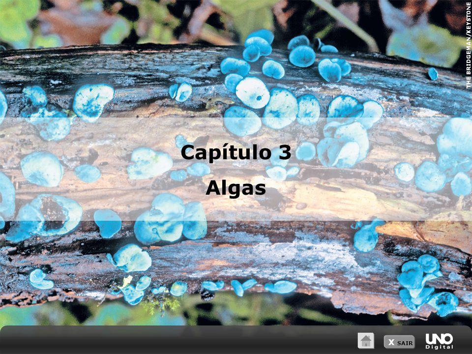 THE BRIDGEMAN/KEYSTONE X SAIR Capítulo 3 Algas
