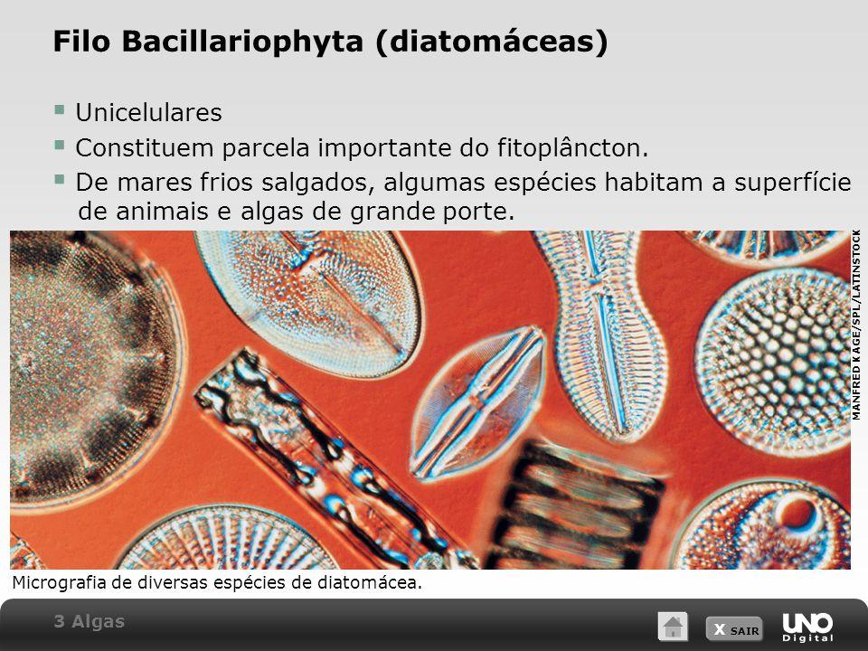 X SAIR Filo Bacillariophyta (diatomáceas)  Unicelulares  Constituem parcela importante do fitoplâncton.