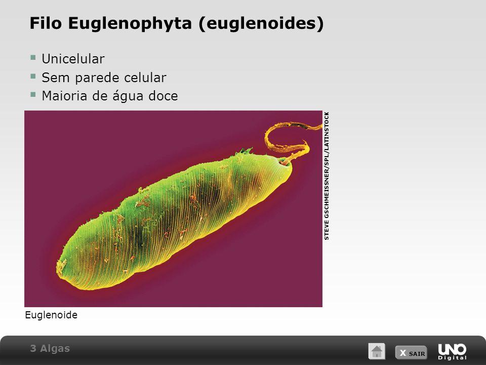 X SAIR Filo Euglenophyta (euglenoides)  Unicelular  Sem parede celular  Maioria de água doce Euglenoide STEVE GSCHMEISSNER/SPL/LATINSTOCK 3 Algas