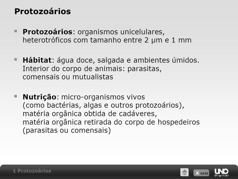X SAIR FiloCaracterísticas principais Rhizopoda (rizópodes ou sarcodíneos) Célula flexível, sem estruturas de sustentação.