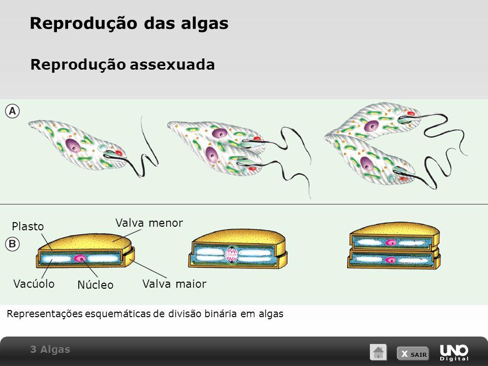 X SAIR Reprodução das algas Reprodução assexuada Representações esquemáticas de divisão binária em algas Plasto Valva menor Vacúolo Núcleo Valva maior 3 Algas