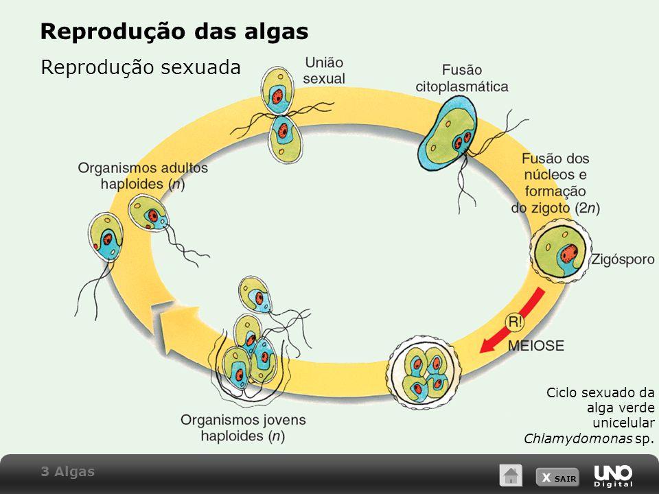 X SAIR Reprodução das algas Reprodução sexuada Ciclo sexuado da alga verde unicelular Chlamydomonas sp.