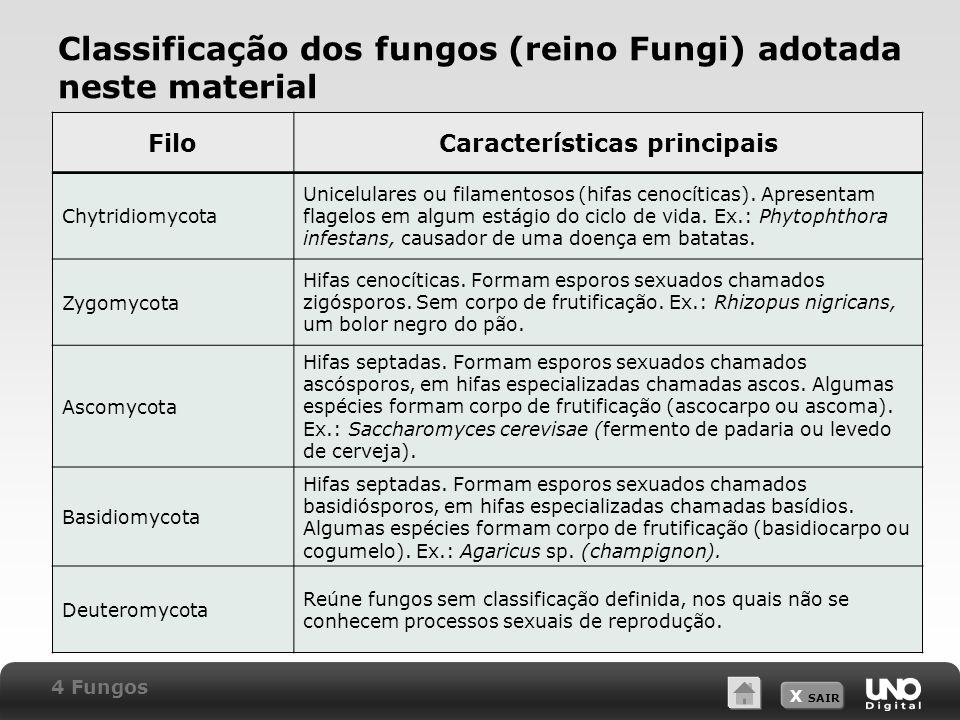 X SAIR Classificação dos fungos (reino Fungi) adotada neste material FiloCaracterísticas principais Chytridiomycota Unicelulares ou filamentosos (hifas cenocíticas).