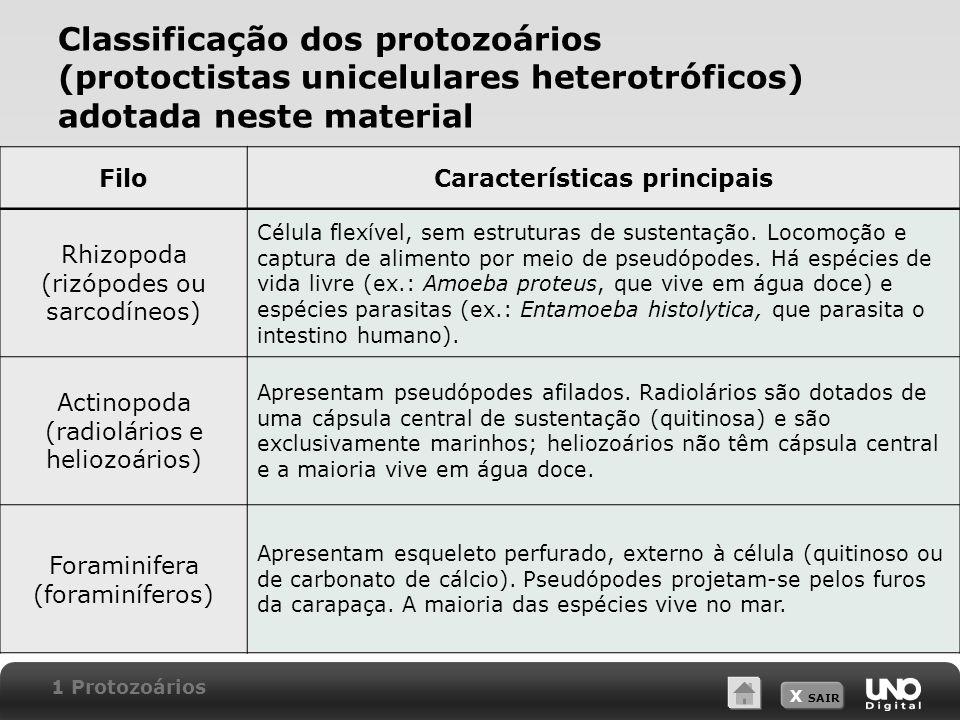X SAIR Classificação dos protozoários (protoctistas unicelulares heterotróficos) adotada neste material FiloCaracterísticas principais Apicomplexa (apicomplexos ou esporozoários) Não apresentam estruturas locomotoras.