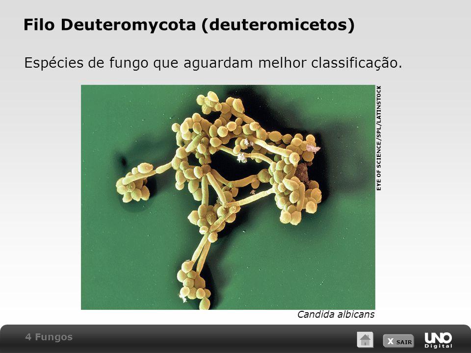 X SAIR Filo Deuteromycota (deuteromicetos) Espécies de fungo que aguardam melhor classificação.