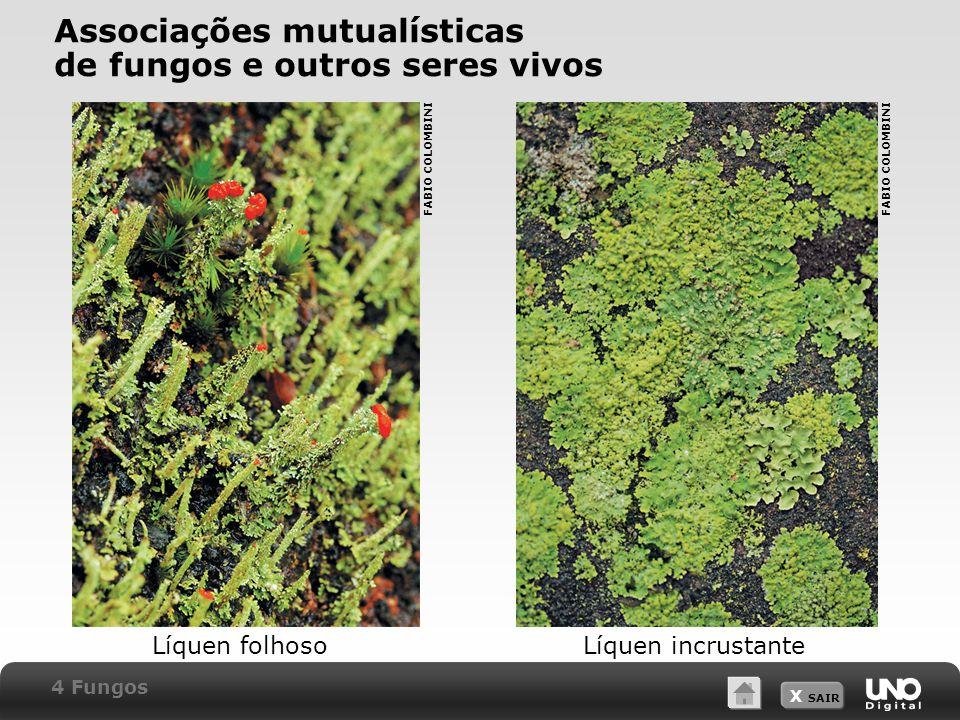 X SAIR Associações mutualísticas de fungos e outros seres vivos Líquen folhosoLíquen incrustante FABIO COLOMBINI 4 Fungos