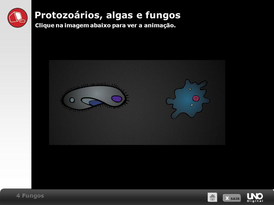X SAIR Protozoários, algas e fungos Clique na imagem abaixo para ver a animação. 4 Fungos