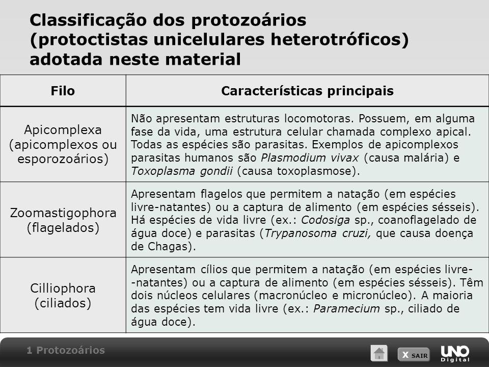 X SAIR Filo Rhizopoda (rizópodes ou sarcodíneos)  Utilizam pseudópodes para locomoção e captura de alimento.