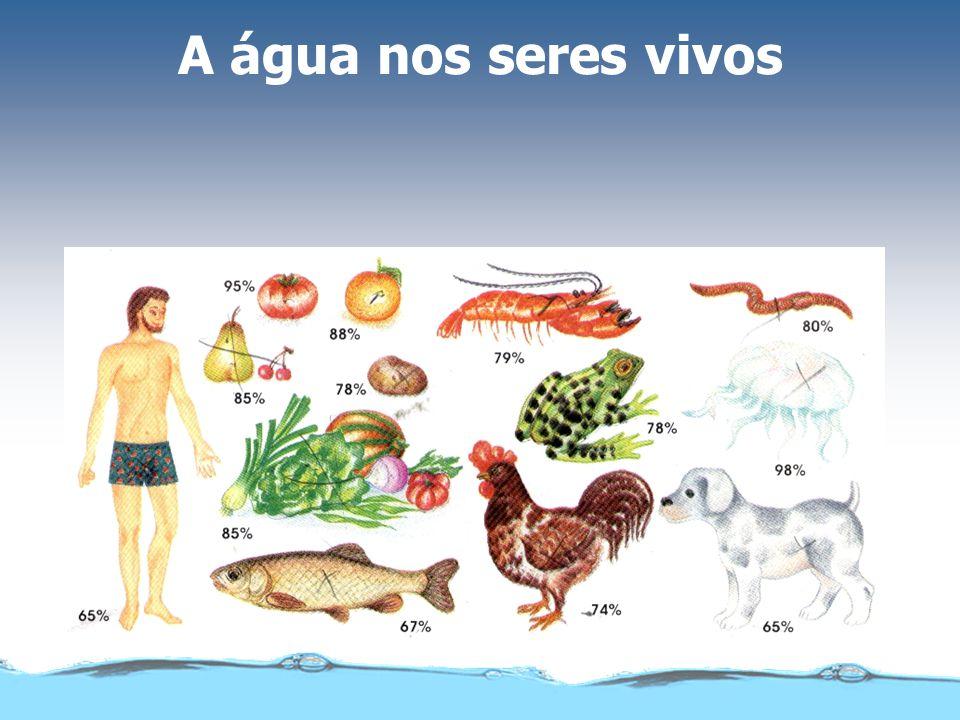 A água nos seres vivos
