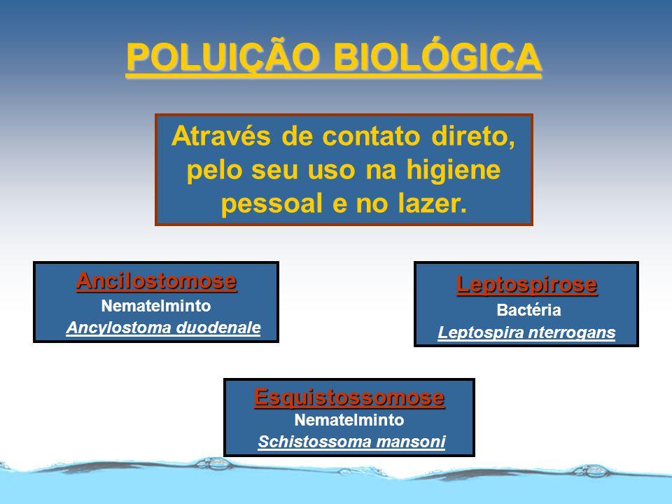 POLUIÇÃO BIOLÓGICA Através de contato direto, pelo seu uso na higiene pessoal e no lazer. Ancilostomose Nematelminto Ancylostoma duodenale Esquistosso