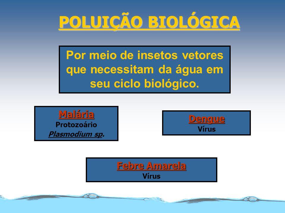 POLUIÇÃO BIOLÓGICA Por meio de insetos vetores que necessitam da água em seu ciclo biológico. Malária Protozoário Plasmodium sp. Dengue Vírus Febre Am