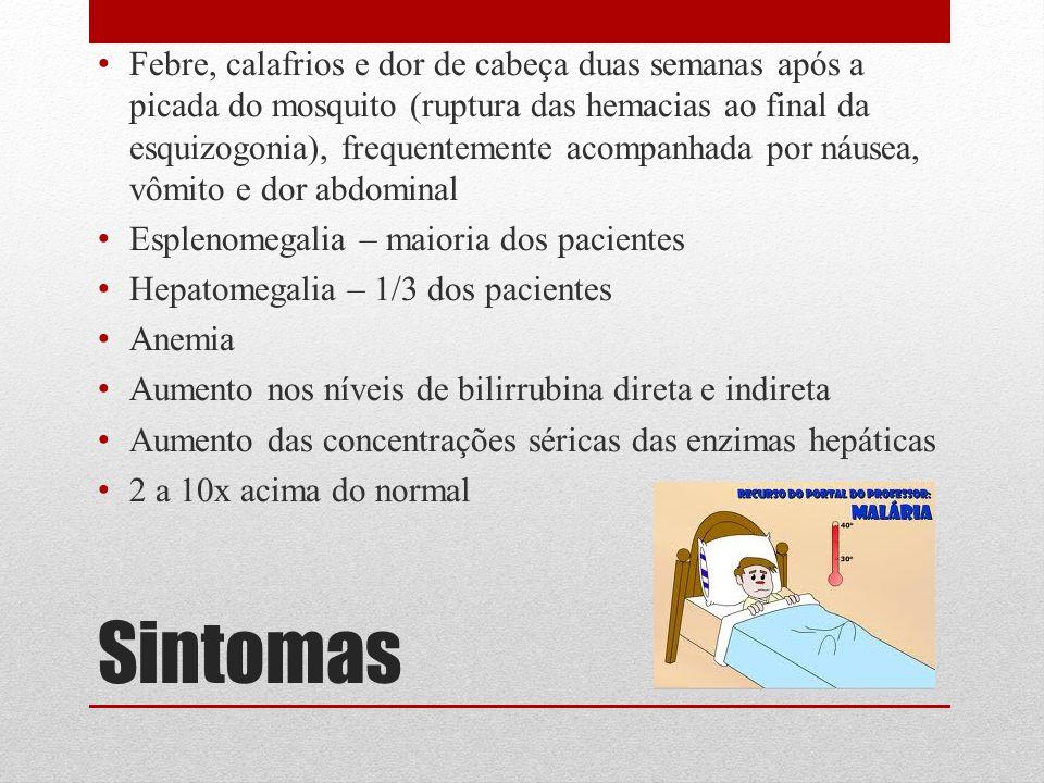 Sintomas Febre, calafrios e dor de cabeça duas semanas após a picada do mosquito (ruptura das hemacias ao final da esquizogonia), frequentemente acomp