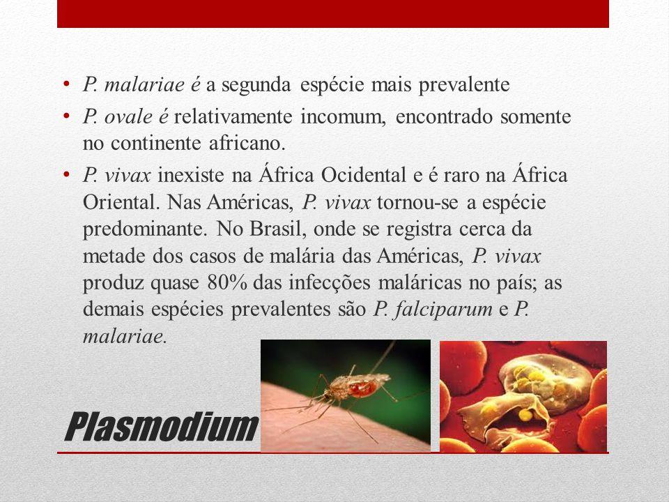 Plasmodium P. malariae é a segunda espécie mais prevalente P. ovale é relativamente incomum, encontrado somente no continente africano. P. vivax inexi