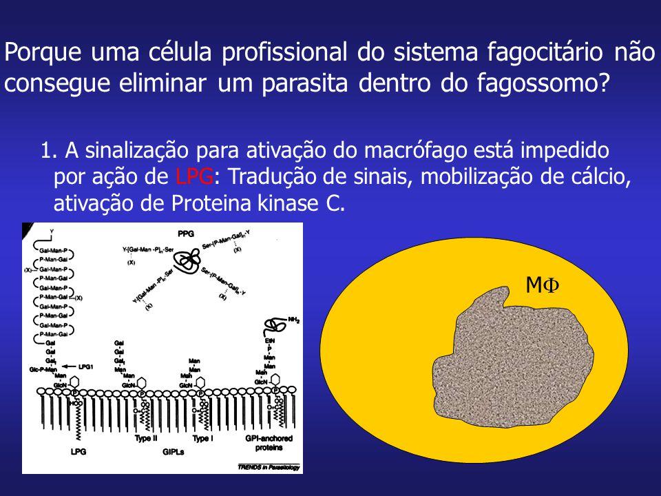 MM Porque uma célula profissional do sistema fagocitário não consegue eliminar um parasita dentro do fagossomo? 1. A sinalização para ativação do ma