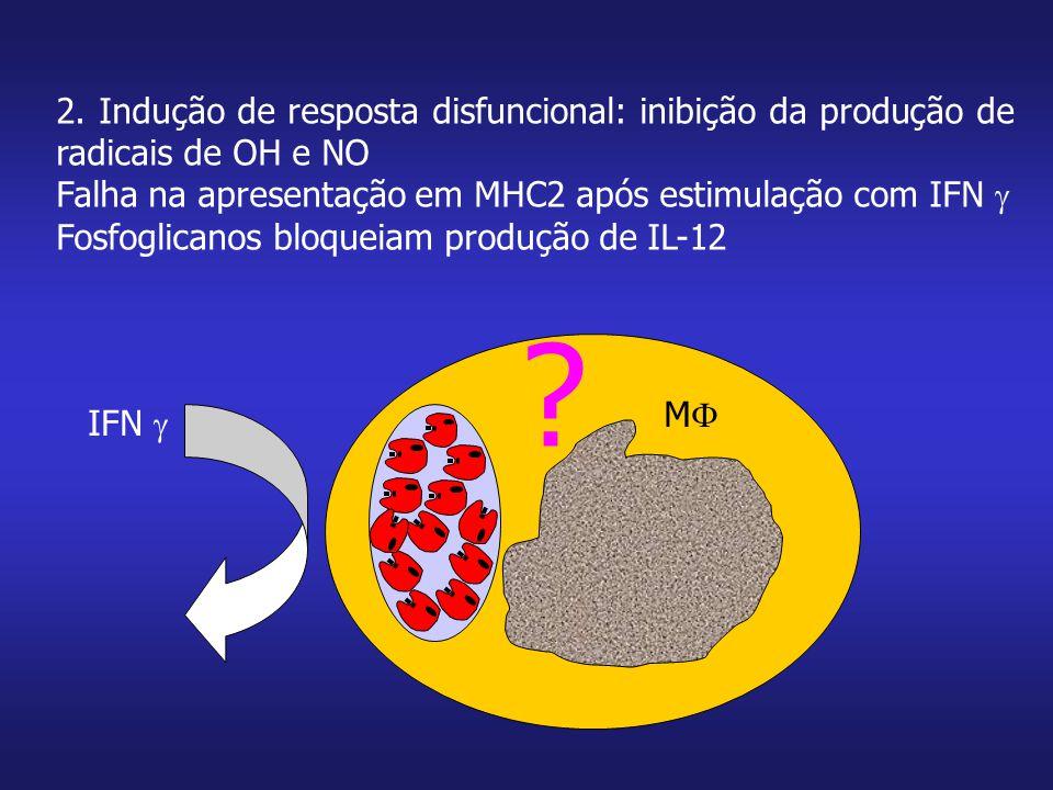 MM 2. Indução de resposta disfuncional: inibição da produção de radicais de OH e NO Falha na apresentação em MHC2 após estimulação com IFN  Fosfogl