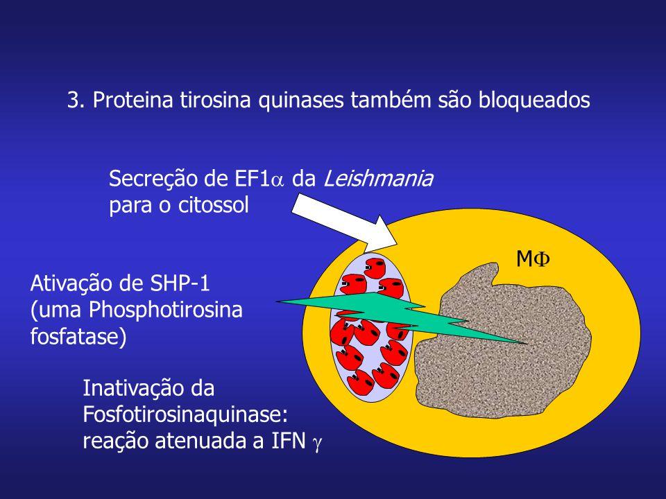 3. Proteina tirosina quinases também são bloqueados MM Secreção de EF1  da Leishmania para o citossol Ativação de SHP-1 (uma Phosphotirosina fosfat