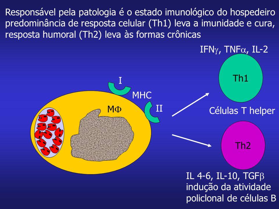 Responsável pela patologia é o estado imunológico do hospedeiro predominância de resposta celular (Th1) leva a imunidade e cura, resposta humoral (Th2
