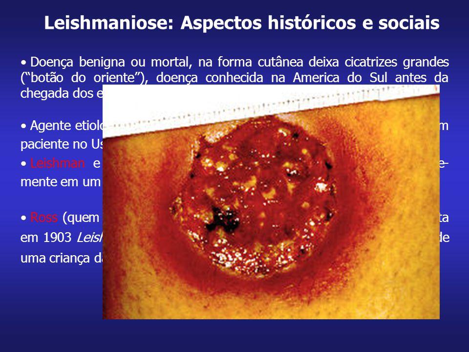 """Doença benigna ou mortal, na forma cutânea deixa cicatrizes grandes (""""botão do oriente""""), doença conhecida na America do Sul antes da chegada dos espa"""
