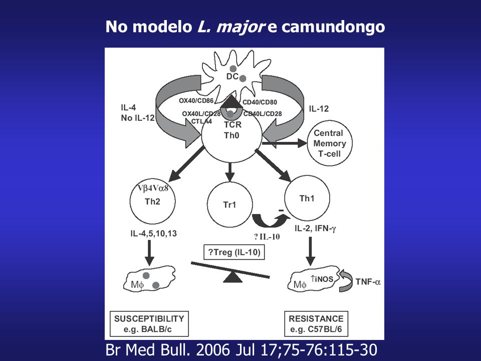 No modelo L. major e camundongo Br Med Bull. 2006 Jul 17;75-76:115-30