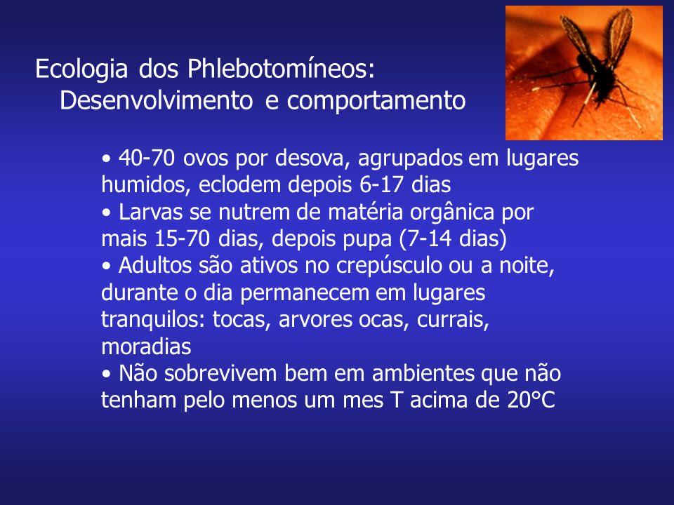 Ecologia dos Phlebotomíneos: Desenvolvimento e comportamento 40-70 ovos por desova, agrupados em lugares humidos, eclodem depois 6-17 dias Larvas se n