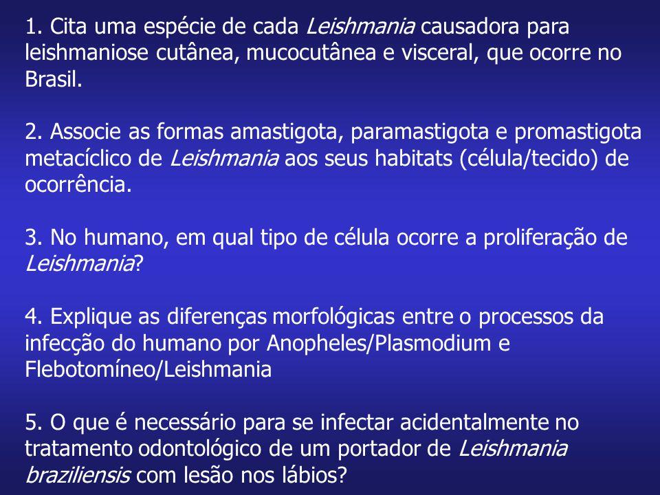 1. Cita uma espécie de cada Leishmania causadora para leishmaniose cutânea, mucocutânea e visceral, que ocorre no Brasil. 2. Associe as formas amastig