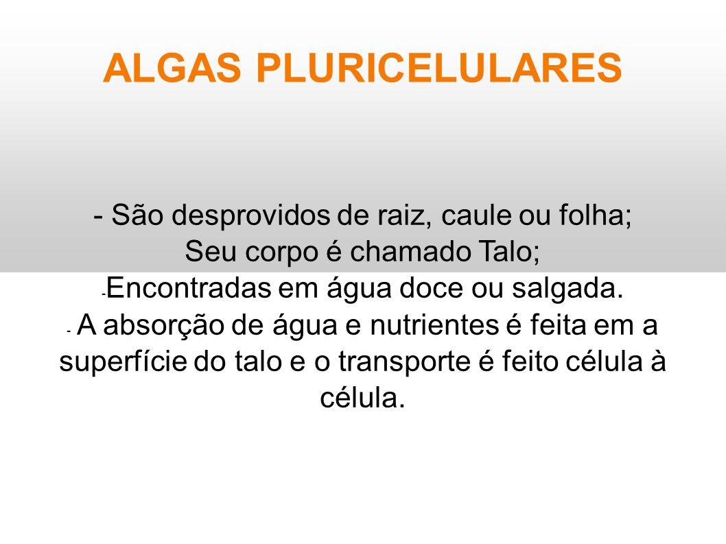 ALGAS PLURICELULARES - São desprovidos de raiz, caule ou folha; Seu corpo é chamado Talo; - Encontradas em água doce ou salgada. - A absorção de água