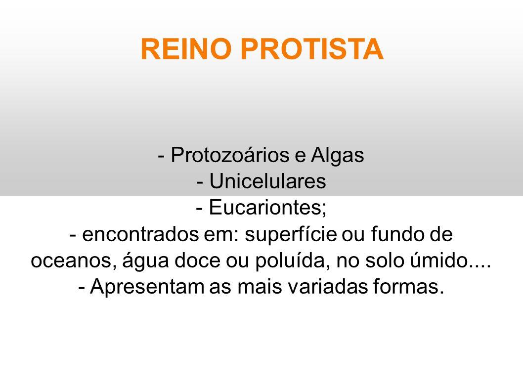 REINO PROTISTA - Protozoários e Algas - Unicelulares - Eucariontes; - encontrados em: superfície ou fundo de oceanos, água doce ou poluída, no solo úm