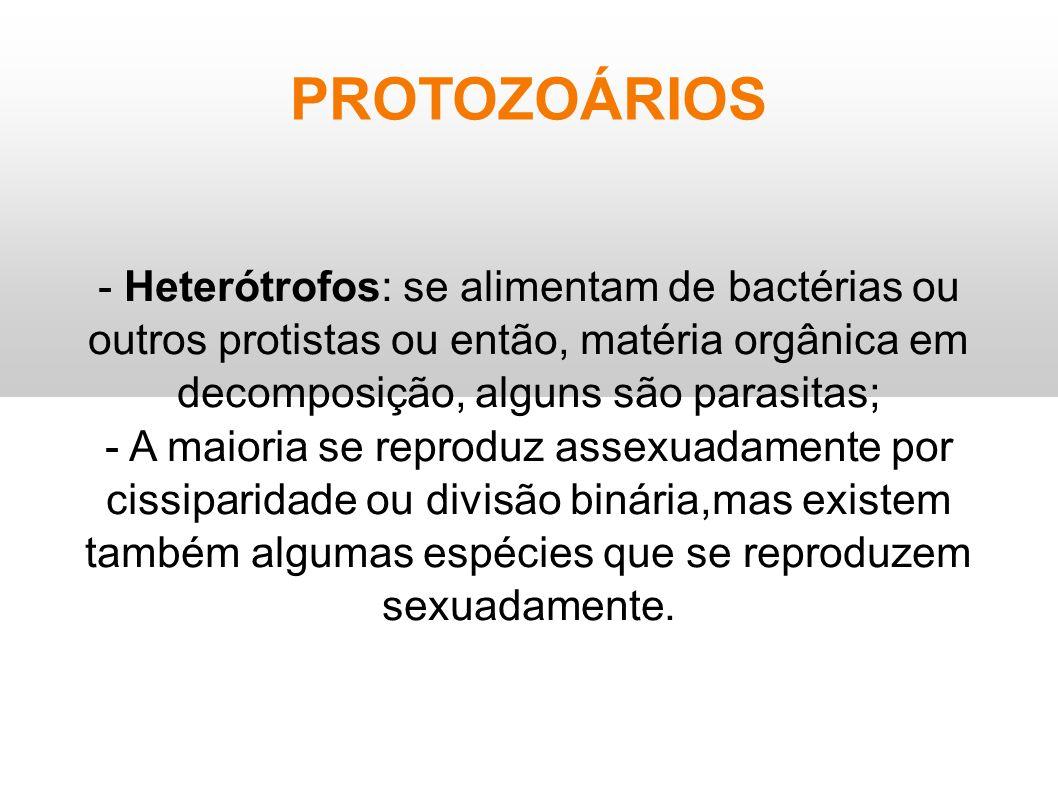 PROTOZOÁRIOS - Heterótrofos: se alimentam de bactérias ou outros protistas ou então, matéria orgânica em decomposição, alguns são parasitas; - A maior