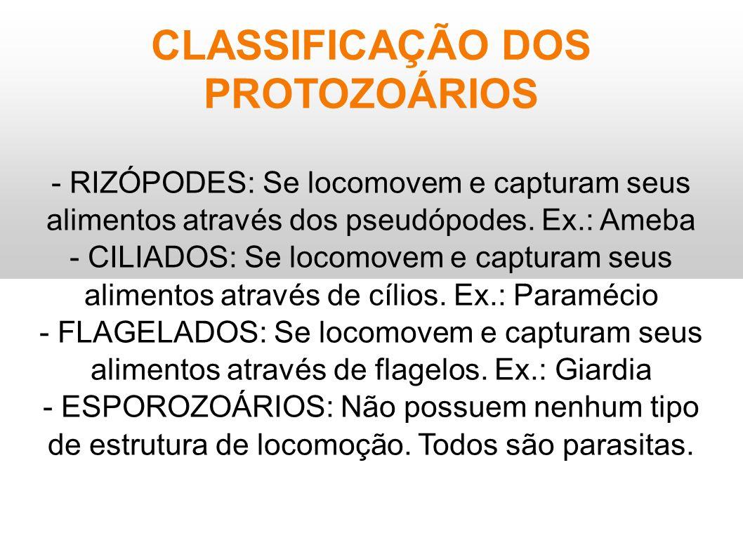CLASSIFICAÇÃO DOS PROTOZOÁRIOS - RIZÓPODES: Se locomovem e capturam seus alimentos através dos pseudópodes. Ex.: Ameba - CILIADOS: Se locomovem e capt