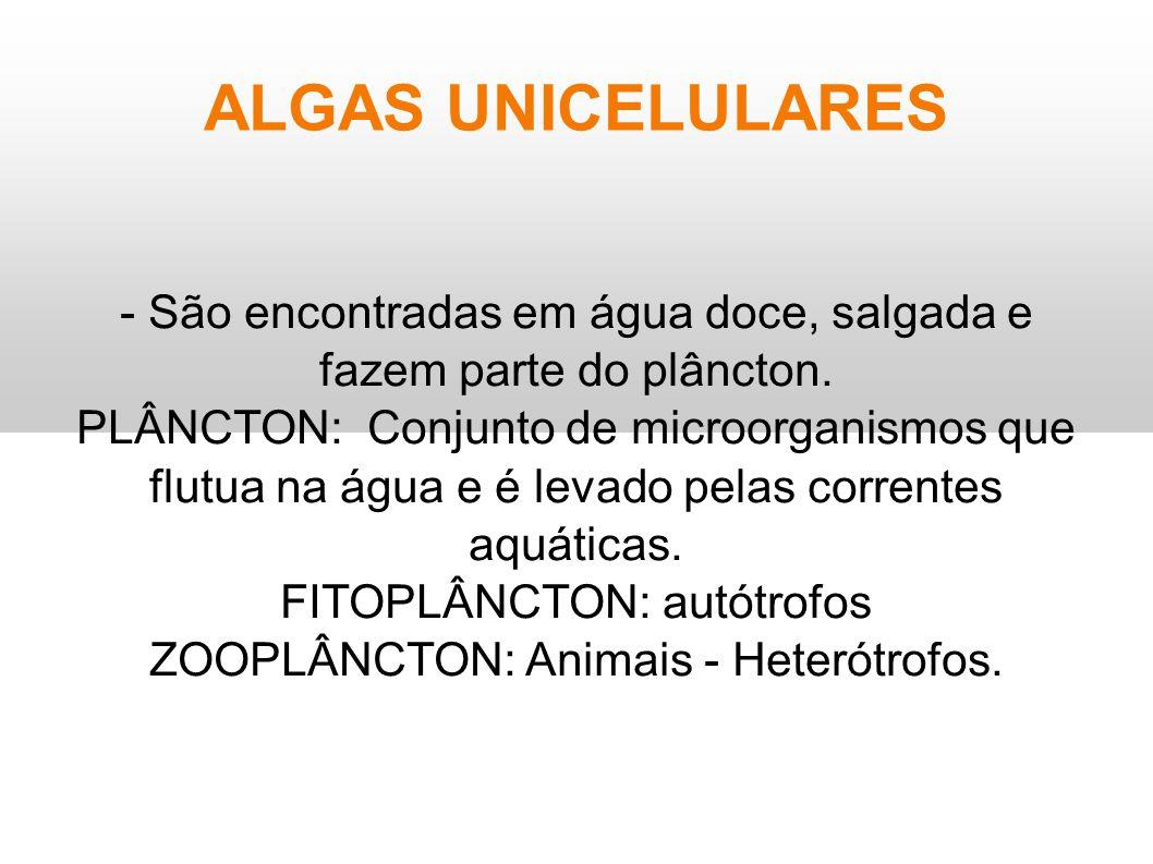 ALGAS UNICELULARES - São encontradas em água doce, salgada e fazem parte do plâncton. PLÂNCTON: Conjunto de microorganismos que flutua na água e é lev