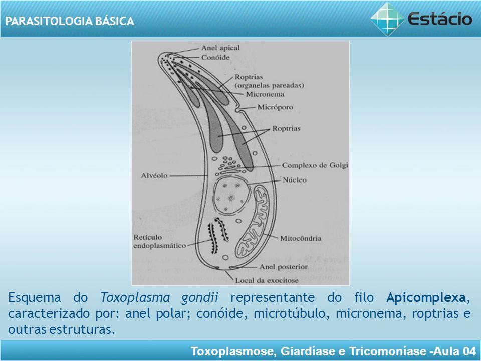 Toxoplasmose, Giardíase e Tricomoníase -Aula 04 PARASITOLOGIA BÁSICA Trofozoíta e Taquizoíta Forma de meia-lua, um dos polos apresenta-se mais grosso e o outro mais afilado.