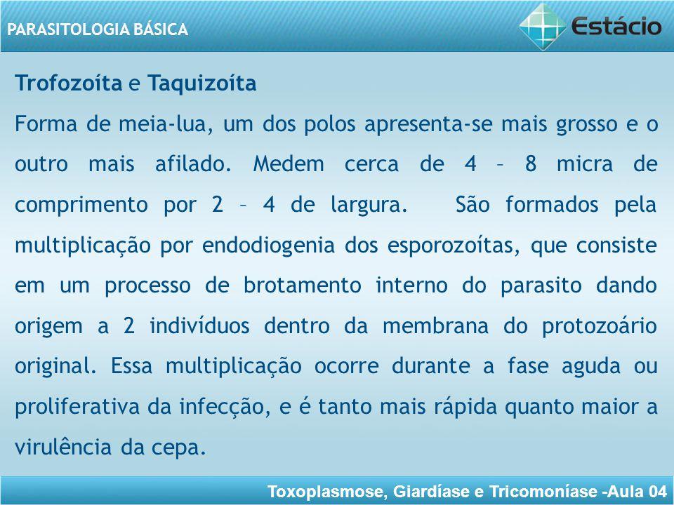Toxoplasmose, Giardíase e Tricomoníase -Aula 04 PARASITOLOGIA BÁSICA Os Taquizoítas são encontrados nas células do sistema fagocítico mononuclear de hospedeiros definitivos e intermediários.