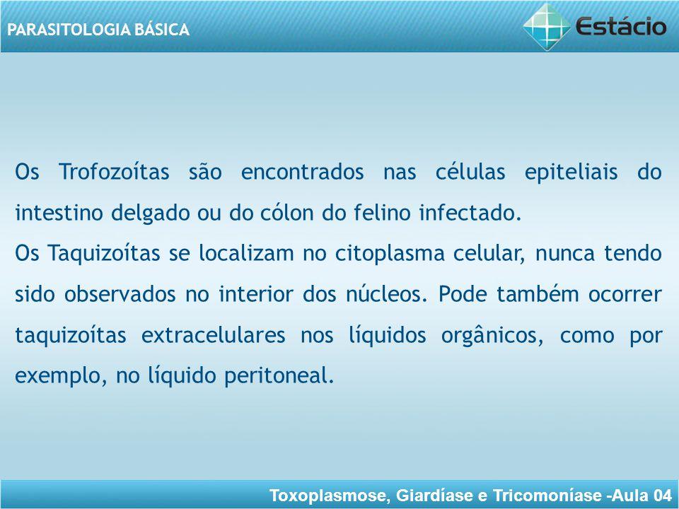 Toxoplasmose, Giardíase e Tricomoníase -Aula 04 PARASITOLOGIA BÁSICA Oocistos São encontrados nos tecidos, sendo esféricos no cérebro e na retina (medindo 20 – 200 micra de diâmetro), mas são alongados no músculo estriado onde medem até 200 micra de comprimento.