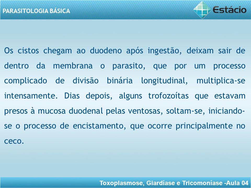 Toxoplasmose, Giardíase e Tricomoníase -Aula 04 PARASITOLOGIA BÁSICA Tem sido sugerido que a resposta imune local seja responsável pelo destacamento do trofozoíta da mucosa, dando início ao processo de encistamento.