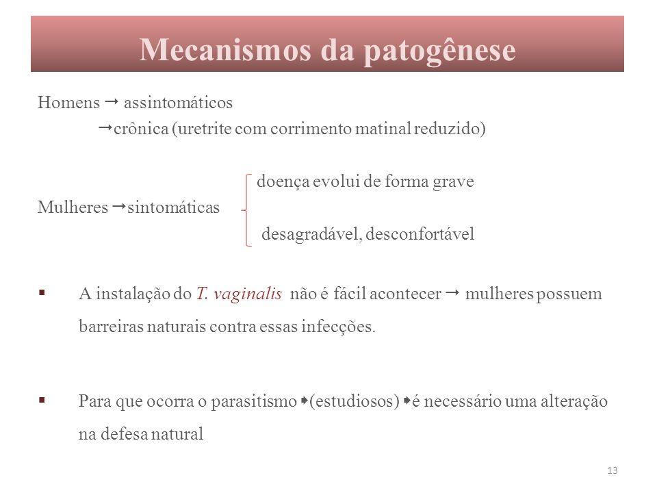 Mecanismos da patogênese Homens  assintomáticos  crônica (uretrite com corrimento matinal reduzido) doença evolui de forma grave Mulheres  sintomát