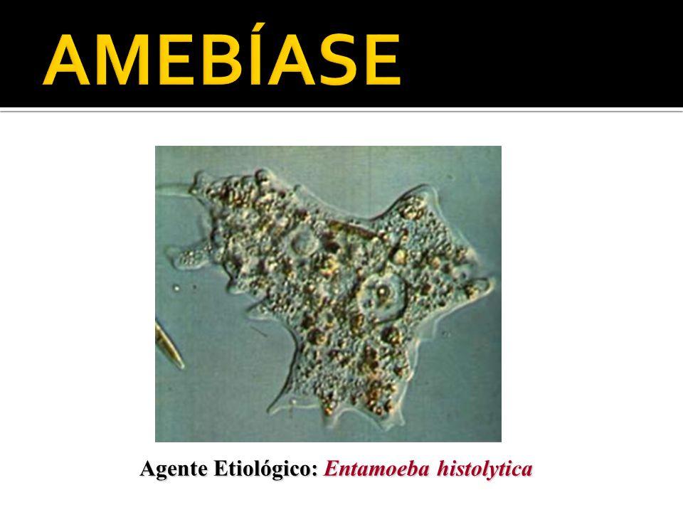 Agente Etiológico: Entamoeba histolytica