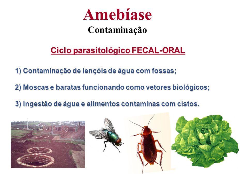 Ciclo parasitológico FECAL-ORAL 1) Contaminação de lençóis de água com fossas; 2) Moscas e baratas funcionando como vetores biológicos; 3) Ingestão de água e alimentos contaminas com cistos.