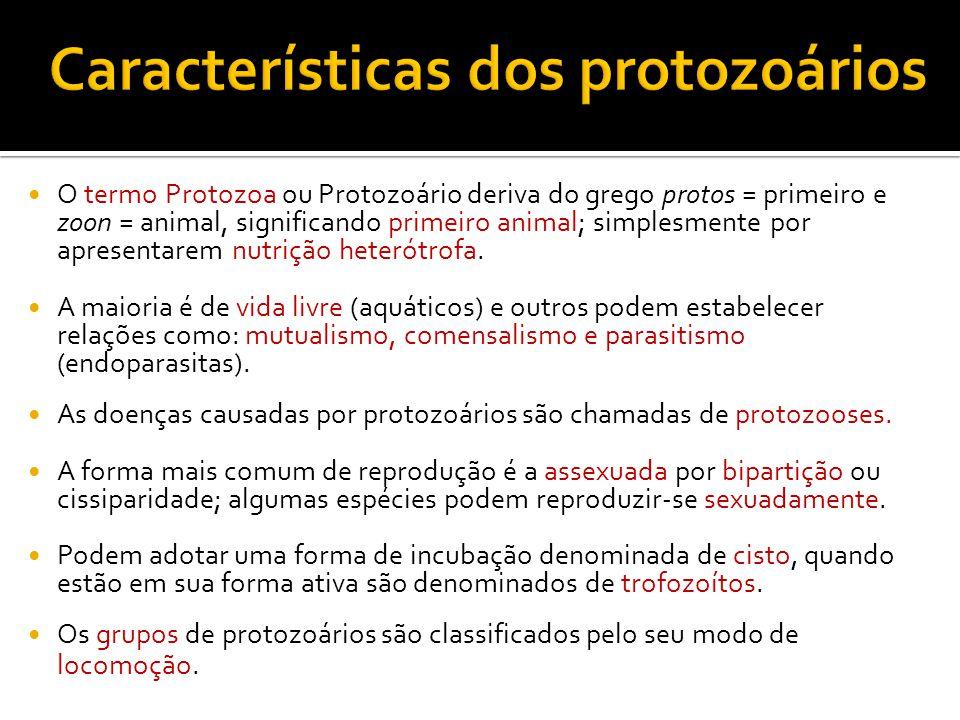 O termo Protozoa ou Protozoário deriva do grego protos = primeiro e zoon = animal, significando primeiro animal; simplesmente por apresentarem nutrição heterótrofa.