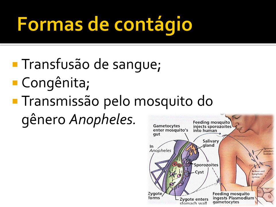  Transfusão de sangue;  Congênita;  Transmissão pelo mosquito do gênero Anopheles.