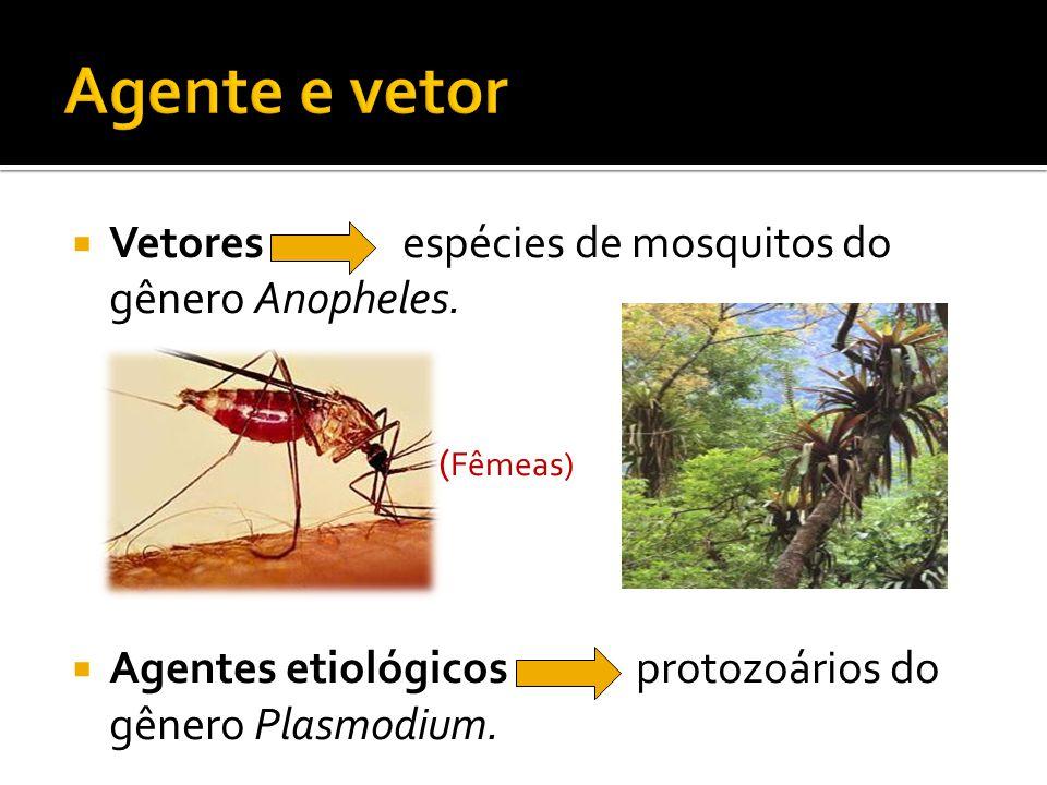  Vetores espécies de mosquitos do gênero Anopheles.